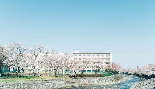 金沢は桜が見ごろです。桜が見れる工大からのおすすめ散歩ルート。